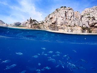 Nos petits fonds marins, nurserie de la mer
