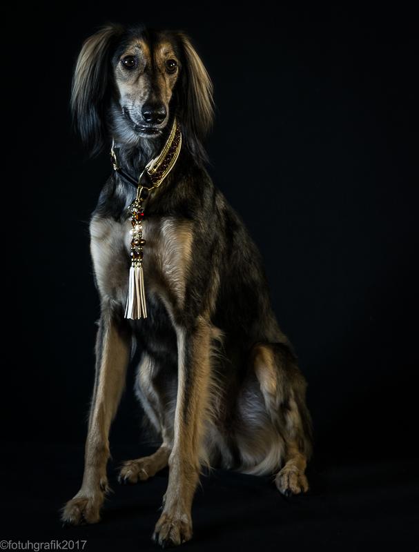 Doggy 4a-