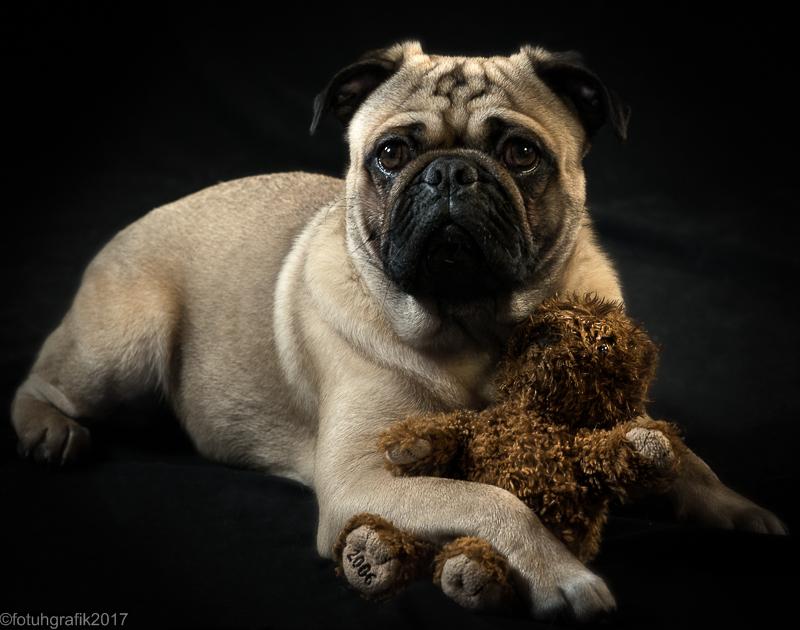 Doggy 5-