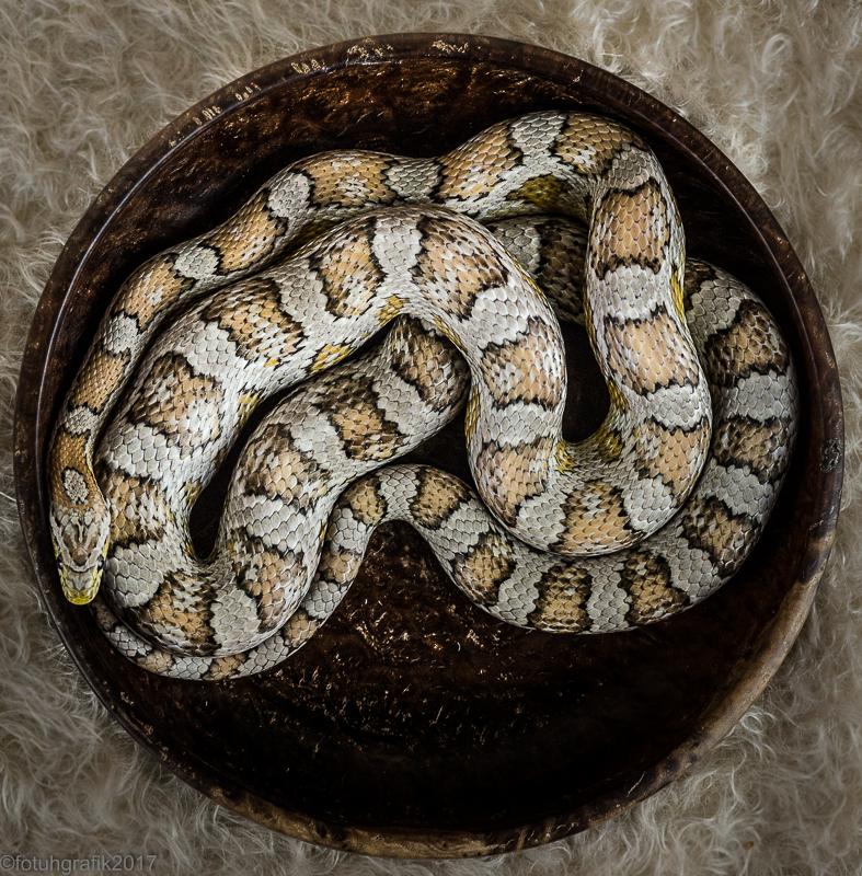 Snake (1 of 1)