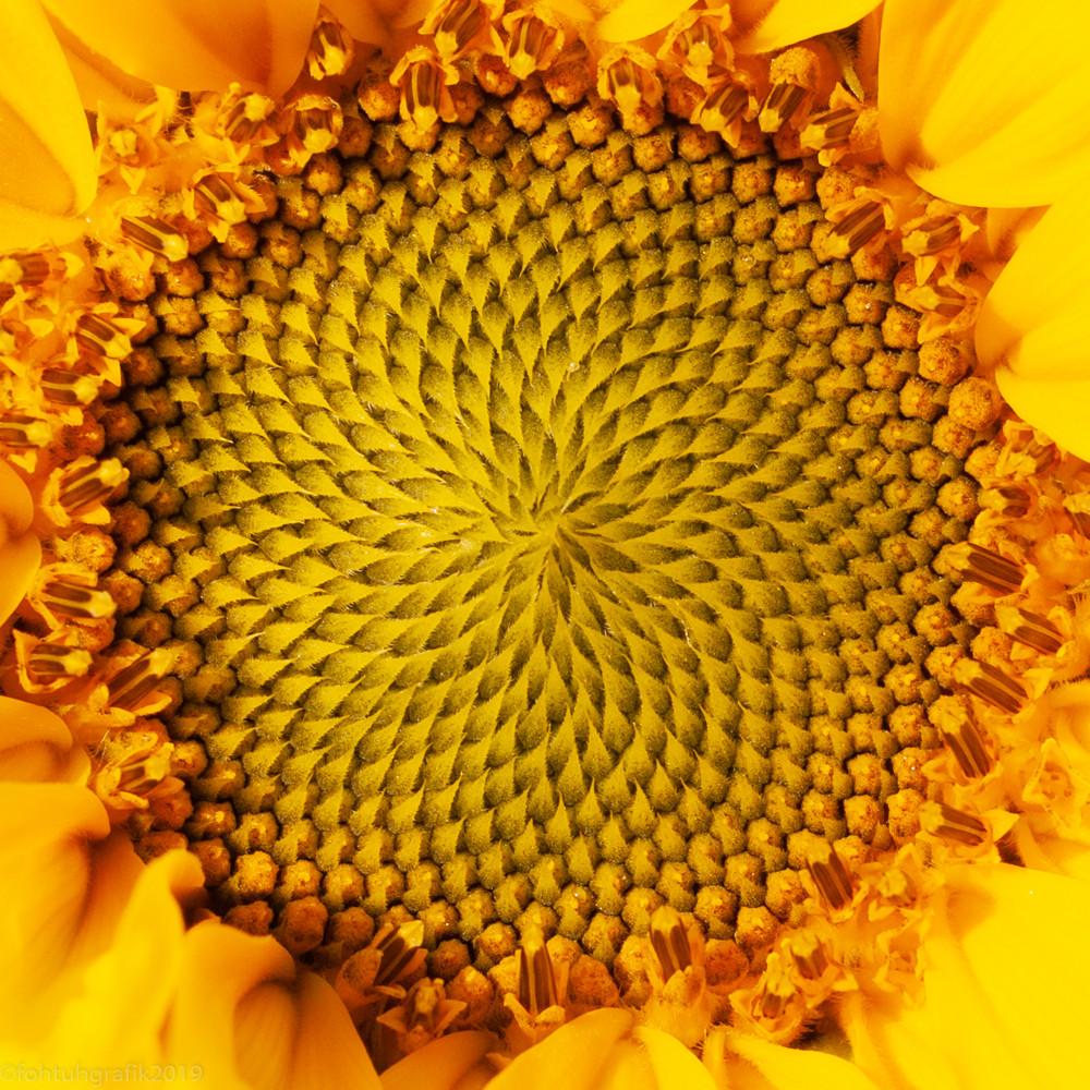 Inside the sunflower