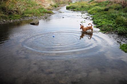 水辺とボール