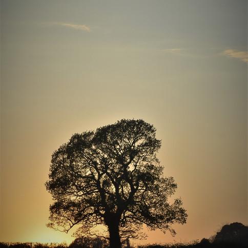 Winter Sunset Tree