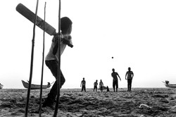 Cricket © Mousty.in