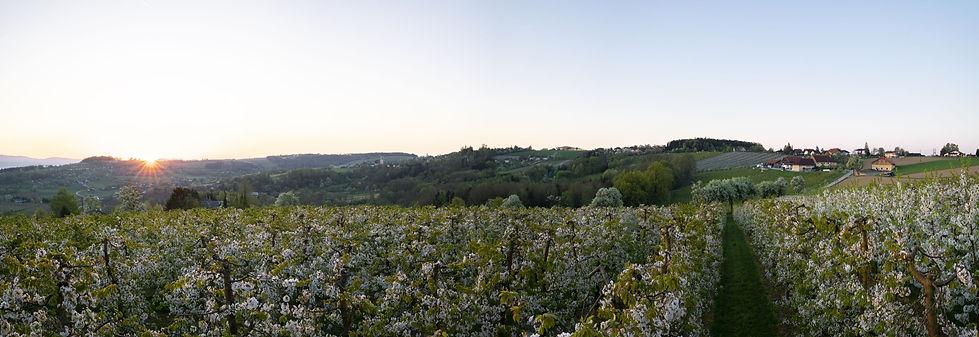 unbenannt-03846-Panorama.jpg