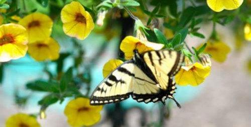 """14"""" Butterfly & Bee Basket"""