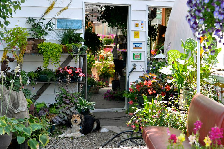 exterior greenhouse with dog
