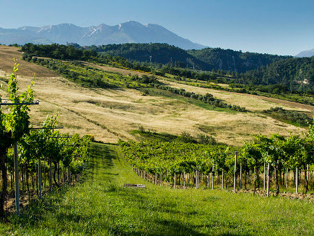 Vino d'Abruzzo