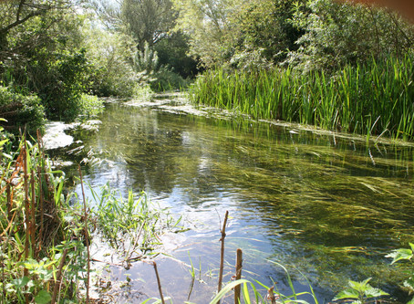 How can you keep your river healthy and clean?