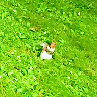 Single squirrel_edited_edited_edited.jpg