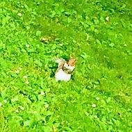 Single squirrel_edited_edited_edited.jpg