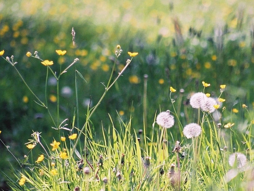 Leave the Lawnmower in the Shed: Let's Talk Living Lawns