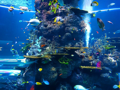 Artificial Reefs Explained