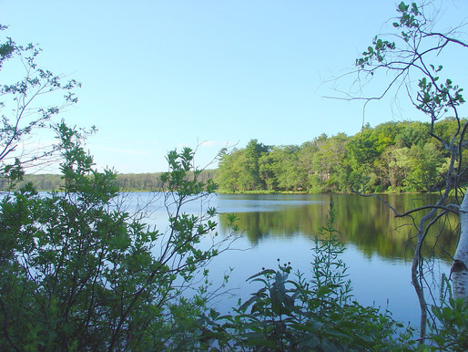 Chebacco Lake Coalition: How to Support Your Local Environment this August!