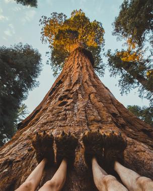 sole-sights-sequoia.jpg