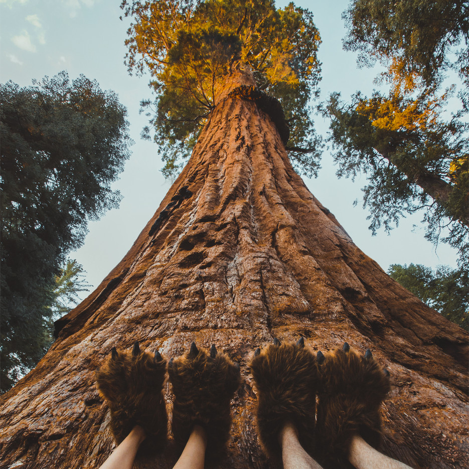 sole-sights-sequoia.jpg