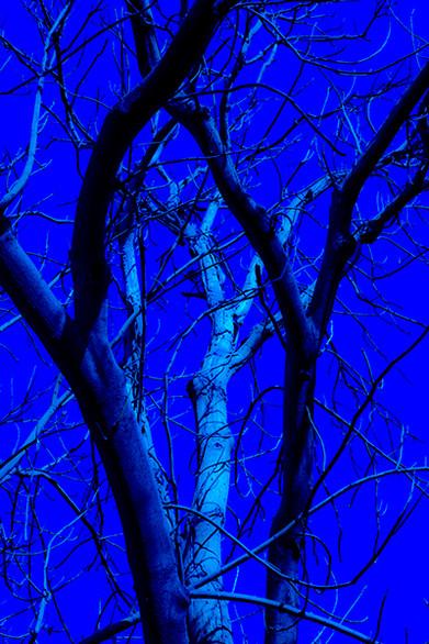Rr Blue