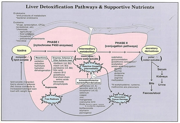 """The TRUTH About """"Liver Detox"""""""