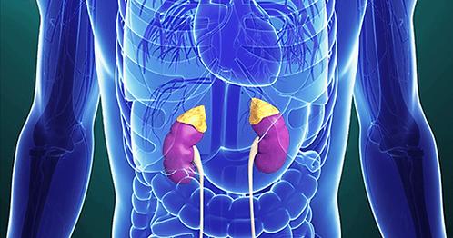 Adrenal Health 101