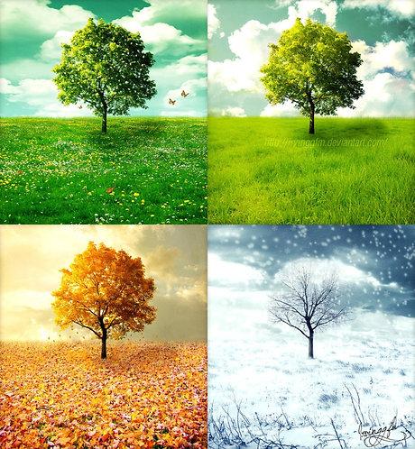 Seasons in Life Poetry Book Volume I