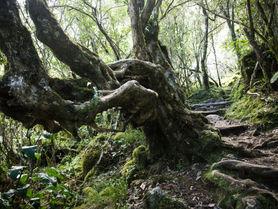 Wald Col du Taïbit
