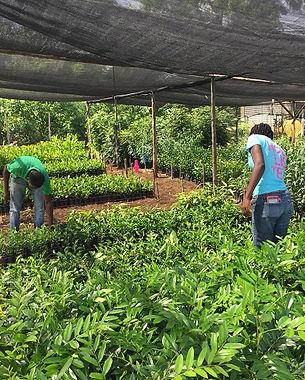 JP Tree Nursery.jpg