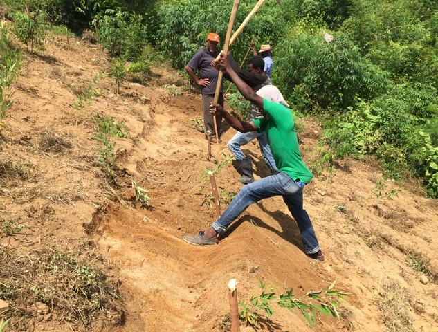 Preparing the Hillside for Planting