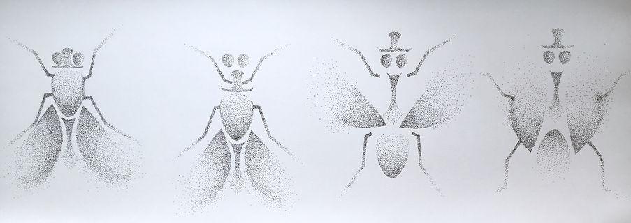 dancing fly.jpg