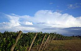 Wachau Wein-Odysee