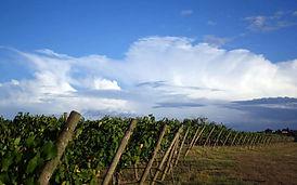 Вино Ферма