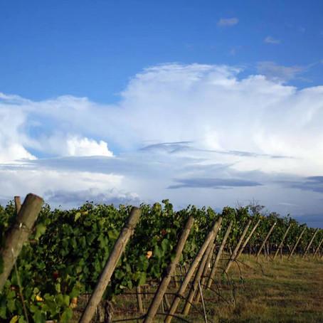 Colorado Wine Country: West Elks AVA