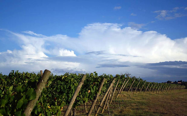 Farm vinho