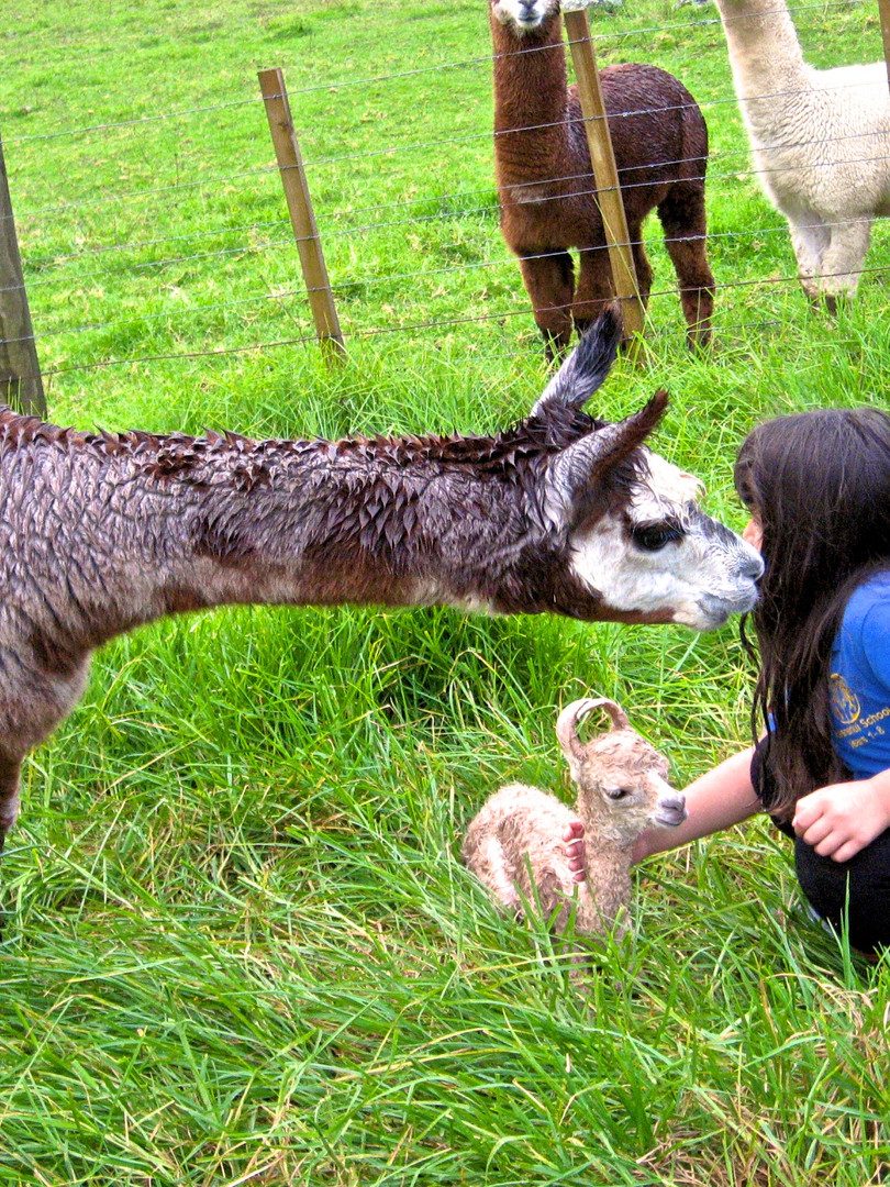 Lorna May with Anna and her newborn cria