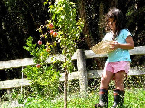 Lorna May picking peaches