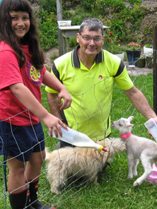 Feeding the orphan lambs October 2018.jp