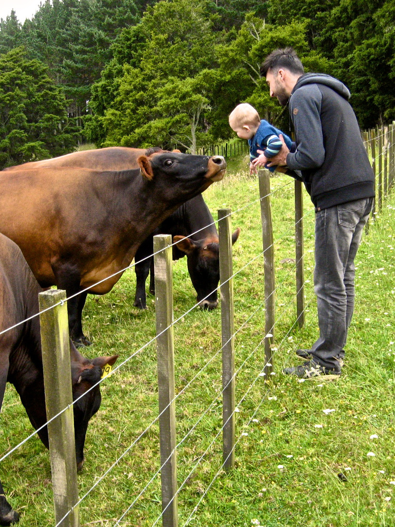 Axl and the cows Christmas 2016.jpg