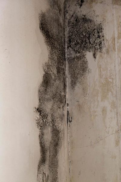 fuori campo cà del sole fuori stanza neggio-svizzera