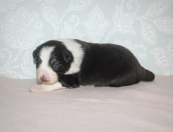 14 days old