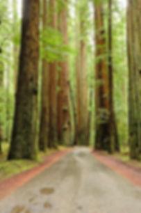 Redwood Capital - Nuestro Equipo