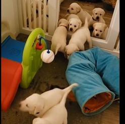 Bailys pups playing.JPG