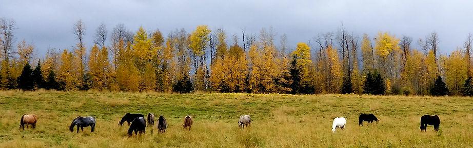 horizonal fall horses in big hill.jpg