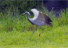 Crane landing.JPG