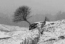 Lone Tree in Winter.JPG