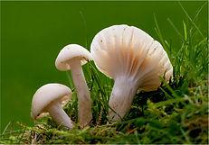 Garden fungi 3.JPG
