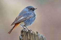 Male black red start on industrial fence