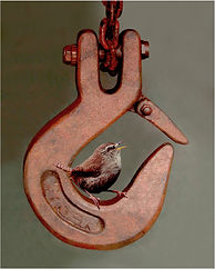 crane hook with wren.JPG
