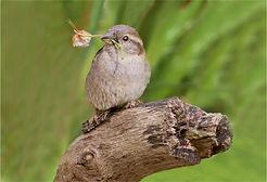Sparrow with glover.JPG