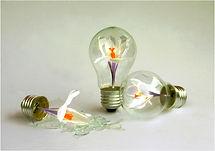 Broken Crocus bulbs.JPG