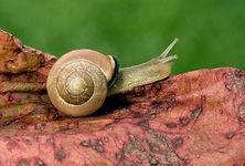snail 2.JPG