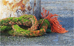 Knotted rope.JPG